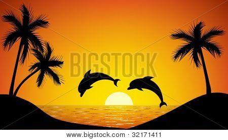 dolphin jumping up from the ocean at sunset