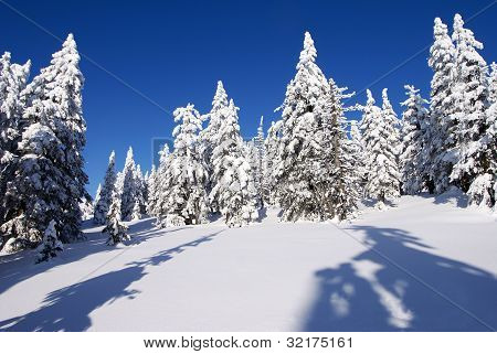 wintry landscape scenery