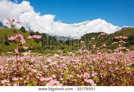 vista de annapurna himal para himal dhaulagiri com campo de trigo mourisco