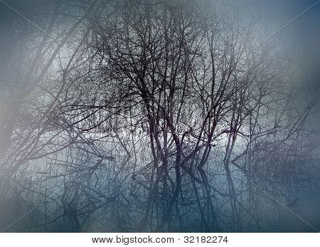 Swamp In Mist