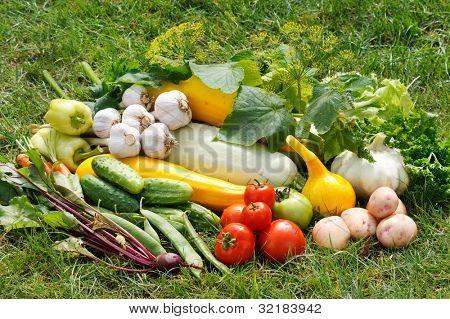 Постер, плакат: свежие овощи, холст на подрамнике