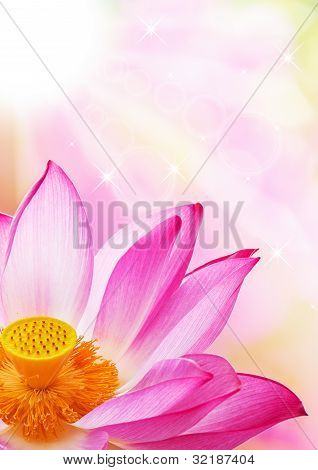 A Close - Up Of A Lotus Flower