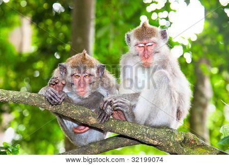 Sacred monkey Forest in Ubud, Bali, Indonesia.