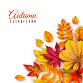 Autumn Leaves Background. Autumnal Border With Isolated Yellow Maple, Oak And Rowan Foliage. Fall Th poster