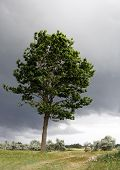 Lonely Green Tree, Dark Clouds On Background. Lonely Tree In The Field Just Minutes Before Powerful  poster