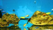 Aquarium With Fish. Stones At The Bottom Of The Aquarium poster