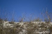 Dry Grass On The Slope Of The Chalk Quarry. Dryland Vegetation. Grass On A Background Of Blue Sky. O poster