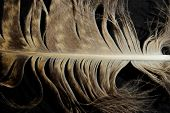 Blurred Image Of Fluffy Feather. Abstract Nature Background. Cropped Shot Of An Owl Feather. Fluffy  poster