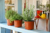 Fresh Potted Home Plants On Light Blue Wooden Veranda Railing Outdoors, Space For Text poster