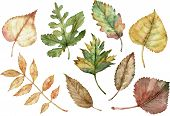 Watercolor Illustration Of Autumn Leaves Isolated On The White Background. Botanical Art. Fall Clipa poster