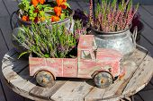 Blossom Heather Calluna In A Toy Car. Vintage Garden Decor, Heather Vulgaris In A Flower Pot. Flower poster