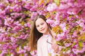 Girl Tourist Posing Near Sakura. Tender Bloom. Child On Pink Flowers Of Sakura Tree Background. Girl poster