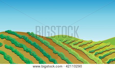 Illustration of a fertile land with growing plants
