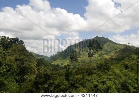 Lush Valley, Mindanao, Philippines