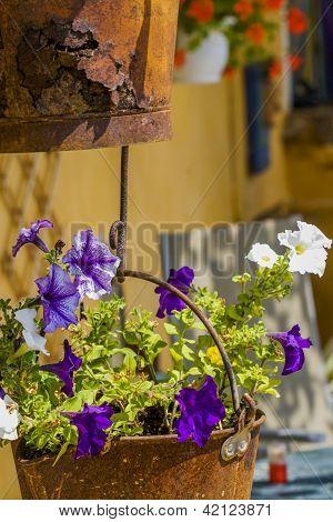 Petunia In Rusty Pot