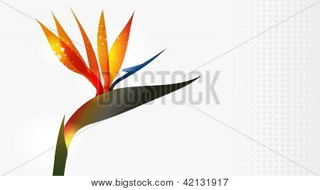 Bird Of Paradise Flower Close Up