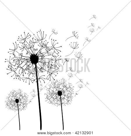 Hand Drawn Dandelion Isolated