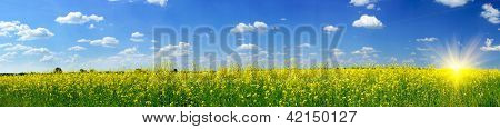 Rapefield And Cloudscape With Sunbeams