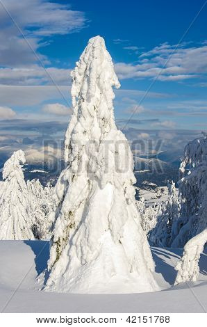 Lonely snow-covered fir tree in winter mountains on a sunny day