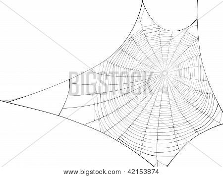 Vector Silhouette Of Web Of Spider.