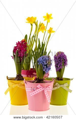 Colorful Hyacinths and daffodils  isolated over white background