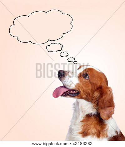 Pensive hunting dog isolated on a orange background