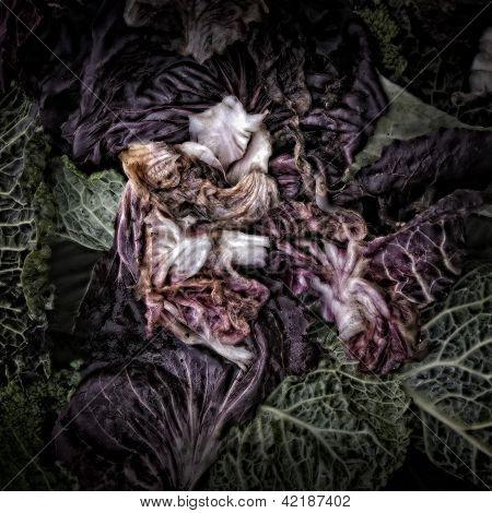 Radicchio on a Compost Heap
