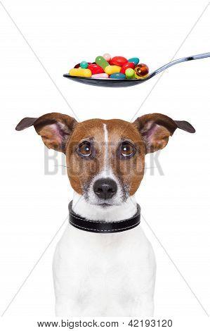 Dog Pills Diet