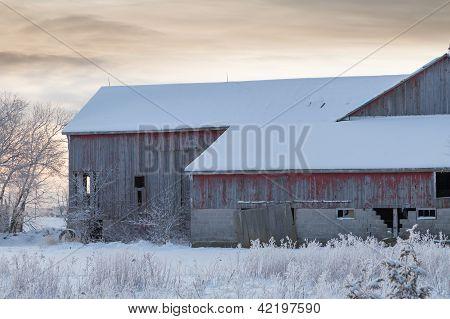 Morning Barn