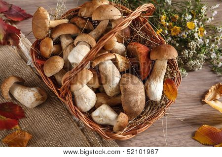 Still life of boletus mushrooms in a basket
