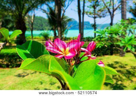 Foliage Sky Tropical Verdure