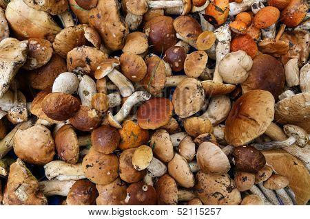 background mushrooms
