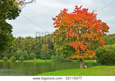 A tree in the autumnal garment