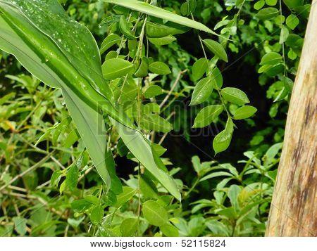 Irrgarten Schonbrunn vivid green leaves
