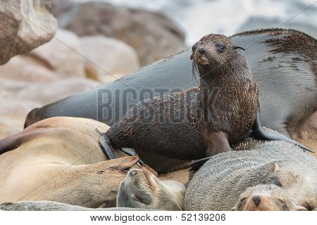 Sea Lions sleeping and baby