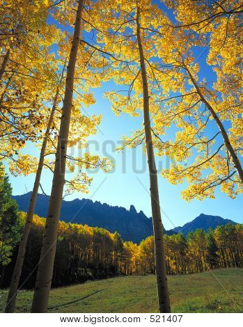 Yellow Forest Clearing