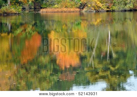 Water Reflection of a Colorful Fall Tree