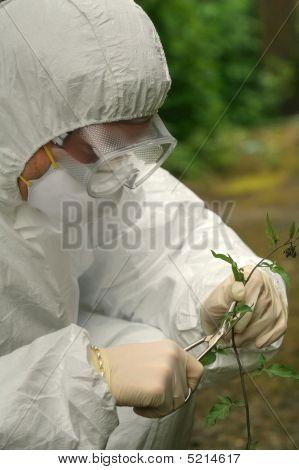 Criminologist Investigate Flower
