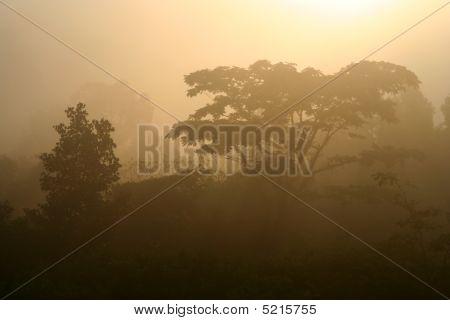 Thailand's jungle