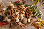 stock photo of boletus edulis  - studio photography of eatable mushrooms in wicker basket - JPG