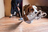 stock photo of household  - Very terrible vacuum cleaner focus on dog head - JPG