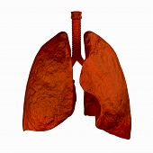 image of bronchus  - Human lungs 3d rendering illustration in red - JPG