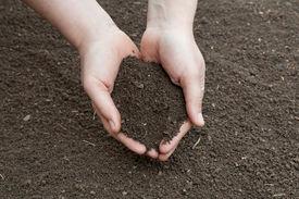 stock photo of humus  - Soil - JPG