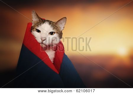 Funny cat dressed in a robe colored paper