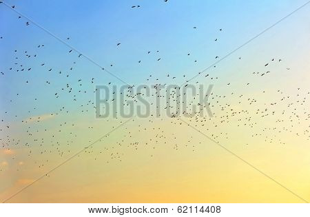 Many birds in sky at sunset