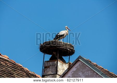 from a house in rust (burgenland, austria) a stork sitting in his nest