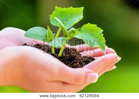 woman holding plant in her hand. symbolic photo for growth and interest