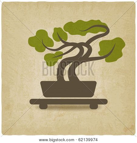 bonsai old background