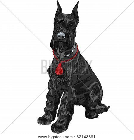 Vector Black Giant Schnauzer Dog Sitting