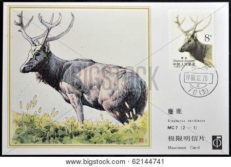 CHINA - CIRCA 1988: A stamp printed in China shows elk Pere David's deer Elaphodus davidianus